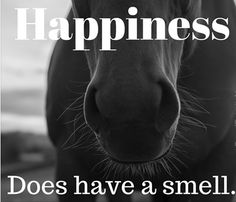 #horse #happy #love