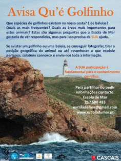 Avisa Qu'é Golfinho www.escolademar.pt