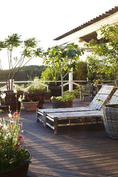 Till höger: Fliksumak (Rhus typhina 'Dissecta') är planterade i två stora ekfat på terrassen och ger fin skugga. En strök med i vinter och är nu ersatt av ett tulpanträd. Det stora fikonträdet är av sorten Bornholm som klarar vintern i ouppvämt garage