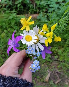 I never get enough of wild flowers 😍😍😍 . He Day, Wildflowers, Nature Photography, Photo And Video, Plants, Instagram, Videos, Photos, Design