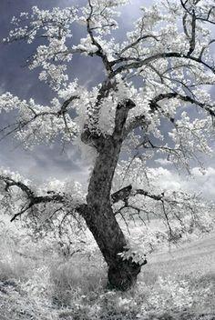 Digital Infrared photography tips from expert Deborah Sandidge.