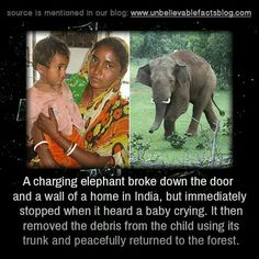 a charging elephant broke down the door and a wall of a home in India, but immediately stopped when it heard a baby crying. It then removed the debris from the child using its trunk and peacefully returned to the forest. Weird But True, Unbelievable Facts, Gentle Giant, Inspirational Message, A Blessing, Baby Elephant, Funny Animals, Wild Animals, Did You Know