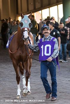 California Chrome before winning the Winter Challenge in Los Alamitos. 12/2016