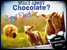 Happy Easter. What about chocolate? Happy cruelty free Easter. www.wazurmood.com