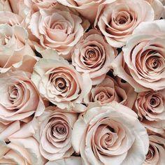Academy Florist (@academyflorist) • Instagram photos and videos