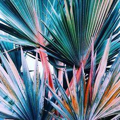 ∙ PLEASE WELCOME ∙ ⠀⠀⠀⠀ ⠀⠀⠀🌿 PLANTS IN FOCUS 🌿 _______________________________  IMAGE BY: @mattfrench _______________________________  ADD: @plantsinfocus _______________________________  TAG: #plantsinfocus _______________________________  MORE TAGS: #greenhouse #glasshouse #botanicalpickmeup #urbanjunglebloggers #urbanjungle #vscoplants #plantspo #plantlife #botanical #instaplant #plantstagram #jungalow #plantsarefriends #cactus #botanicalgarden #jungalowstyle #jungle #planta…