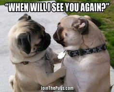 Pug love!