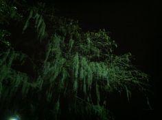 Same tree, different angle.