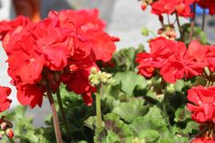 Red #carnations sit in a flower box next to #BasilicaSanGiovanniInLaterano