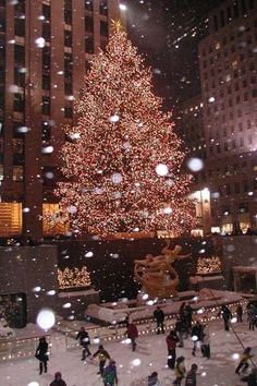 Go to NY and see the tree! Missed out last year.