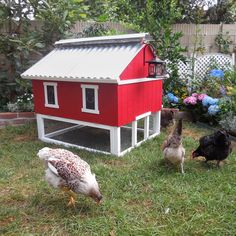 Backyard Chicken Product: Chicken Coops - Easy Clean Chicken Coop (up to 6 chickens) - from My Pet Chicken