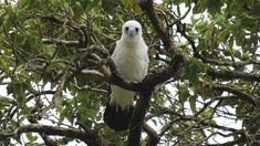 Sign the petition: the Australian government must not allow the destruction of Christmas Island's pristine rainforest for the sake of a…