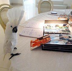Após quase dois anos da morte de Hebe Camargo, família cuida de aves da apresentadora