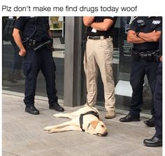 They're all good boys.