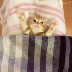 We provide Thousands of cute animal pictures, gifs, videos on demand! Also great article on how to be dogs, cats & birds owner. Cute Little Animals, Cute Funny Animals, Cute Dogs, Funny Cats, Cute Kittens, Chat Kawaii, Gato Gif, Image Chat, Cute Animal Videos