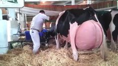 nice Intelligent Technology Smart Farming Cow Goat Milking Chicken Collecting Eggs Pig Calf Feeding