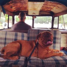VW split camper dogue de bordeaux puppy - doesn't get much better!
