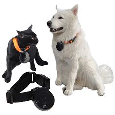 $24.99 Black Pet Dog Cat Collar Video Camera +FS   This would be really fun to watch the morning after haha!