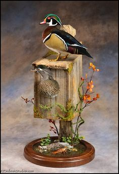 Wood Duck Mount