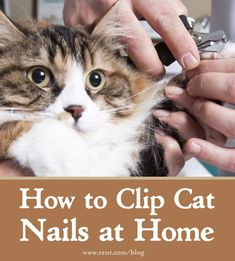 Learn how to clip cat nails at home. [Rent.com Blog] #kittens #cats #pets