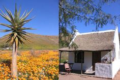 The South African Pet Friendly Directory - the most complete guide to holiday accommodation that welcomes you and your pets. Travel Destinations, Travel Tips, Holiday Accommodation, South Africa, Pets, House Styles, Nature, Road Trip Destinations, Naturaleza