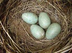bird nests - Google Search