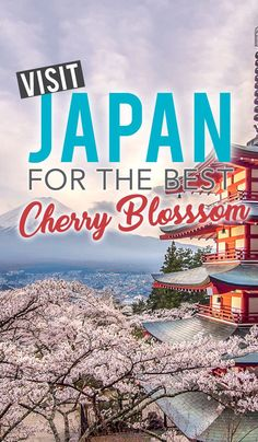 Japan Cherry Blossom 2019 Forecast: When & Where to Visit – Asia destinations - Travel Destinations Japan Travel Guide, Asia Travel, Travel Guides, Travel Abroad, Cherry Blossom Japan, Visit Japan, Beach Trip, Beach Travel, Beijing