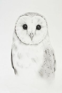 ORIGINAL  Barn Owl Charcoal Drawing  11x14 by JaclynsStudio