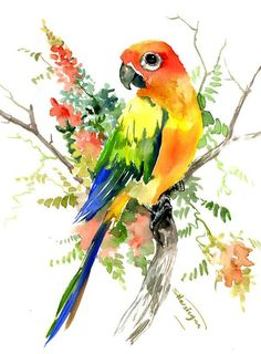 Sun Conure Parakeet and Hoya, original one of a kind watercolor artwork pet birds, bright colors illustration conure