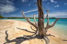 Take note, this is what paradise looks like.   Pictured: No Man's Land, Tobago Image Credit: Timothy Corbin via Flickr  #Tobago #Trinidad #TrinidadAndTobago #Caribbean #Island #Beach #NoMansLandTobago #TobagoBookings #NoMansLand #POTD #PictureOfTheDay #CaribbeanTravel #Travel #Vacation