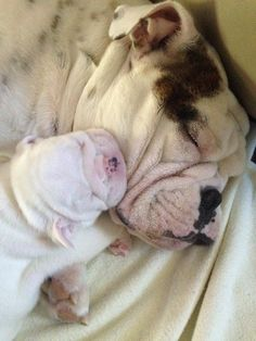 ❤ Mom time, is special time ❤ Posted on I love English Bulldogs