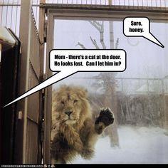 Dog Cat Meets Door On Pinterest Door Frames Doors And