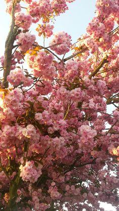 Endlich Frühling  #spring#flowers#summer#tree