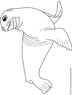 Sea Lion coloring pages - Zoo animals   Zoos, Lions and Animal
