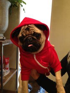 Hoody pug