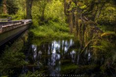 https://flic.kr/p/MUqcCo | Bridges | Photo made on a small stream scene in the charming Hoh Forest in Olympic National Park, Washington State in the United States, Foto feita num pequeno riacho na encantadora Hoh Forest no Olympic National Park, estado de Washington nos Estados Unidos .