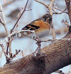 Utah Bird Records Committee