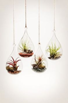 "A fleet of ""wren's nest"" hanging aeriums. http://shop.pistilsnursery.com/products/hanging-aerium"