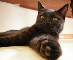 my cat- nerina by fazen on flickr cc