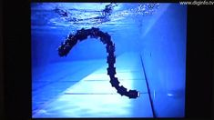 Snake Robot - on land & water - YouTube Creepy and cool!  It really swims like a sea snake!