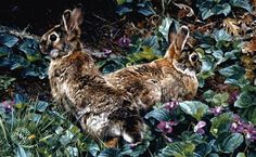 "Carl Brenders Presents ""Violet Trails and Cottontails"""