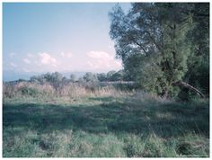 Analog Street / Nature walk 00003 Open fields