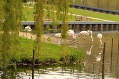 Limburg, gezien door Paul Rutten