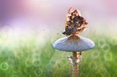 La fable du champignon et du papillon *