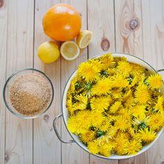 Ingredience na med i sirup jsou v podstatě stejné, jen upravíte poměr pampelišek a cukru; Greta Blumajerová Med, Foodies