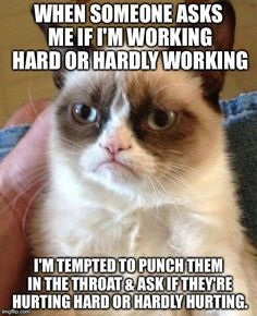 Most Funny Quotes : QUOTATION – Image : Quotes Of the day – Life Quote Grumpy cat funny, grumpy cat meme …For more grumpy cat humor visit www.bestfunnyjoke… Sharing is Caring Funny Quotes, Hilarious Memes, Grumpy Quotes, Grumpy Meme, Quotes Quotes, Funny Videos, Funny Pranks, Funny Grumpy Cats, Funniest Quotes
