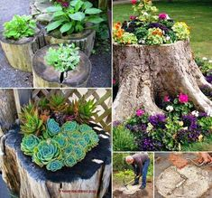 How to Create a Tree-Stump Planter Wondering what to do with that old Tree Stump? Upcycle into a fabulous Planter. Turn a lopped-off tree into the highlight of your yard by filling it with colorful flowers    You could even add a fairy door!