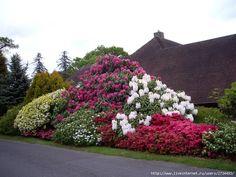 Leonardslee Gardens Bahar (İngiltere).