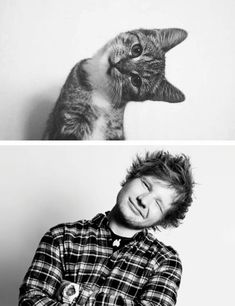 Ed Sheeran + cat. cant decide if this should go on my cats board... or people board...
