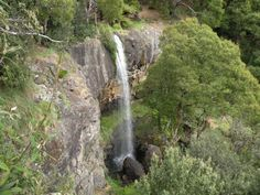 Preston Falls, Gunns Plains - a VERY short walk for those who can't manage any great distance. Article and photo by Wayne and Julie Cartwright for www.think-tasmania.com Tasmania, Preston, North West, Waterfalls, West Coast, Distance, Places To Visit, Australia, Island